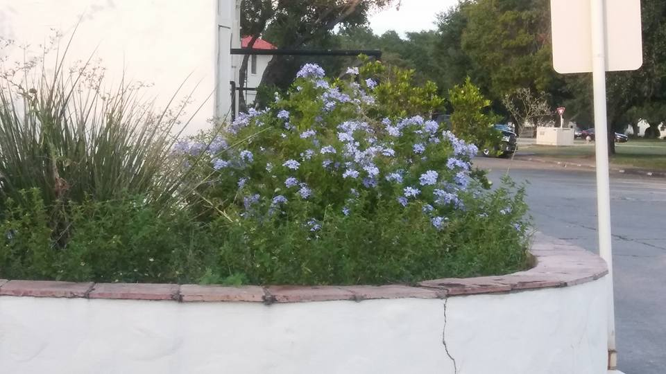 the-garden.jpg